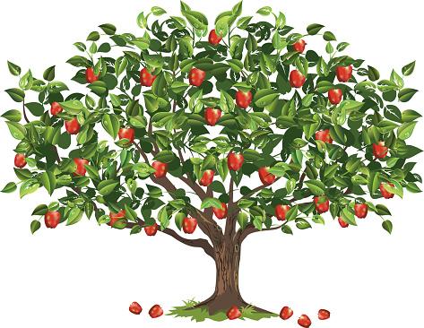 apple-tree-like-column-clipart-9